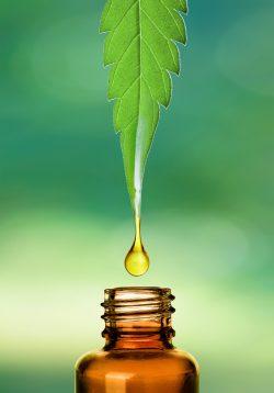 Milyen előnyökkel jár a kannabisz olaj fogyasztása?
