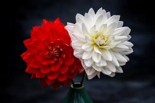 Hogyan válaszd ki a legjobb virágboltot?